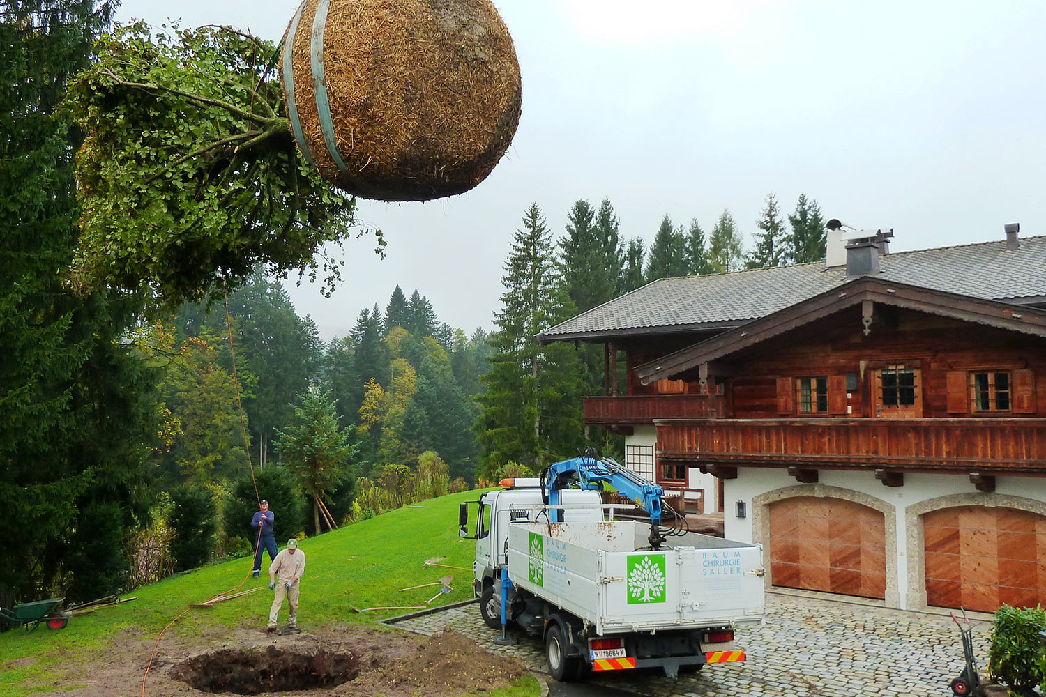 Adult tree transplantation